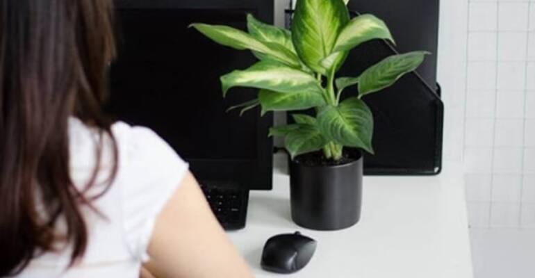 Gợi ý chọn cây để bàn làm việc tăng hiệu suất hiệu quả