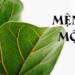Mệnh Mộc hợp cây gì để bàn làm việc tốt cho đường công danh?